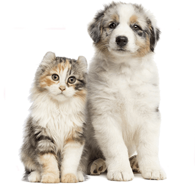 Its Cat and Dog